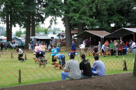 Great weather to watch a dog show live!