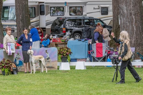 Friday's Candid 2019 – Clackamas Kennel Club