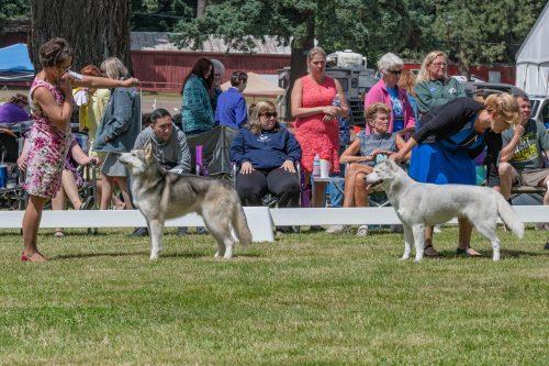 Friday's Candid 2019 – Clackamas Kennel Club